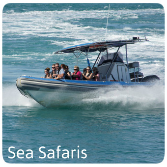 Sea Safaris
