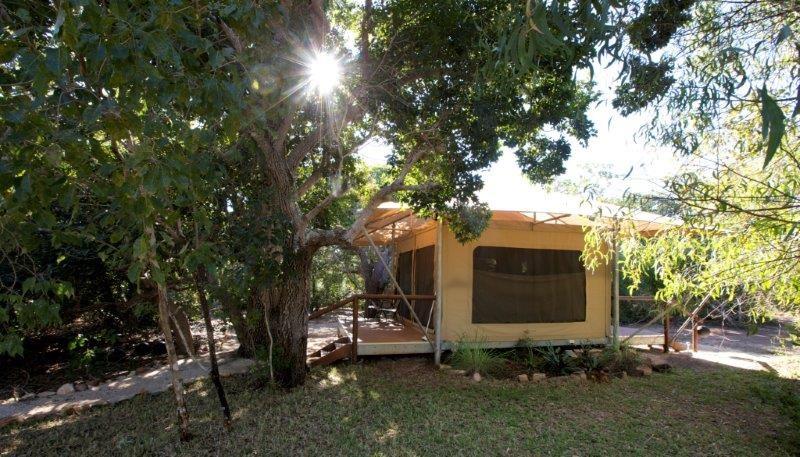 Rainforest Safari Tent