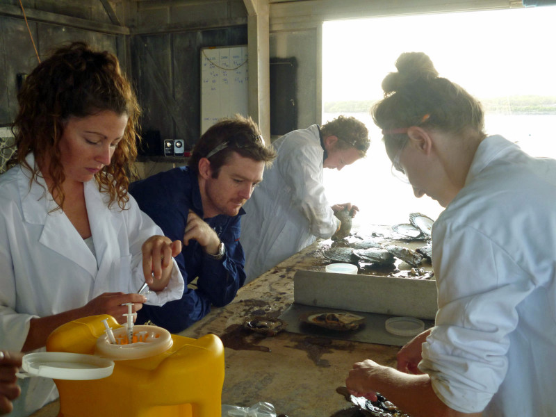 Macquarie Uni, NSW, Pearl Oyster Research at KMRS 2011 (1)